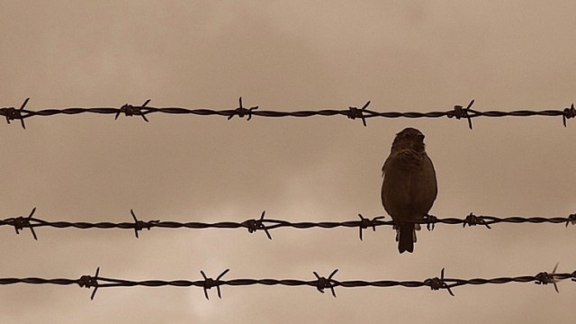 bird_on_a_wire のコピー 3